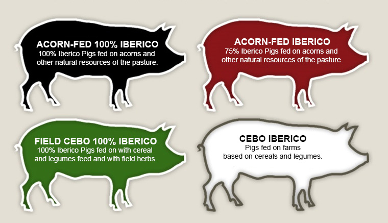 Iberico Ham Spanish Quality Regulation